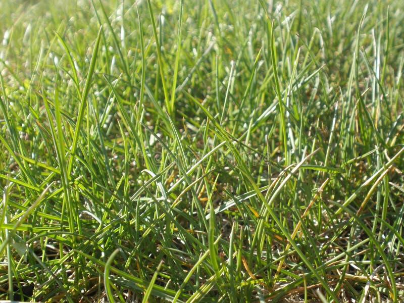 Сочная, яркая, зеленая трава в лесе стоковые изображения rf