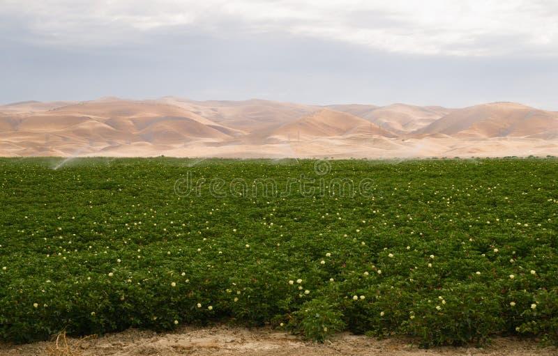 Сочное земледелие Калифорнии полива завода поля фермы стоковое фото rf