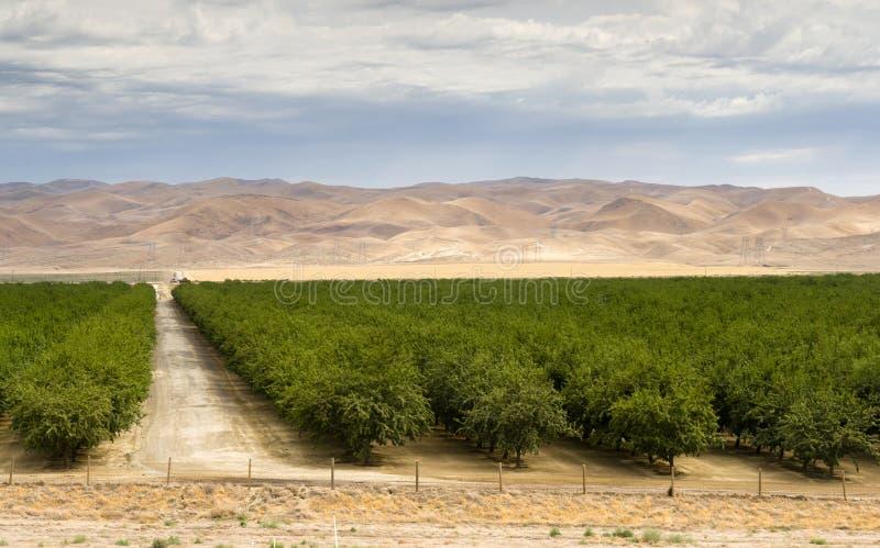 Сочное зеленое поле Калифорния земледелия сельскохозяйственного угодья сада объединенная стоковое изображение rf