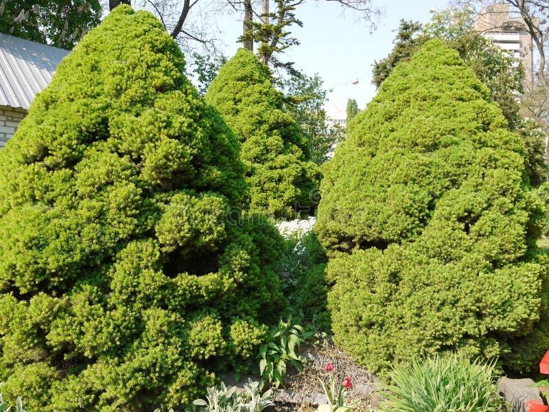 Сочные деревья в саде с много ветвями за которыми не смогите увидеть хобот дерева С частью multi стоковые фотографии rf