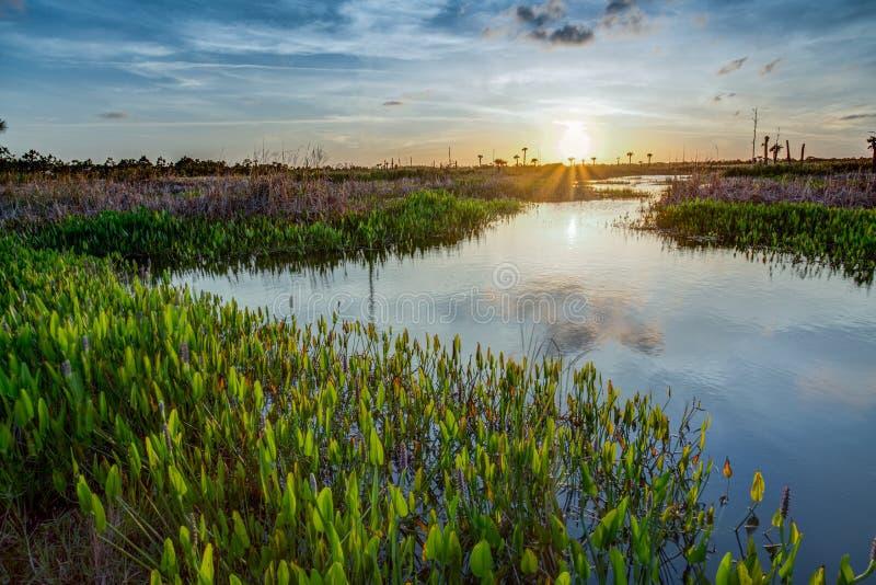 Сочные заболоченные места Viera на заходе солнца стоковое изображение