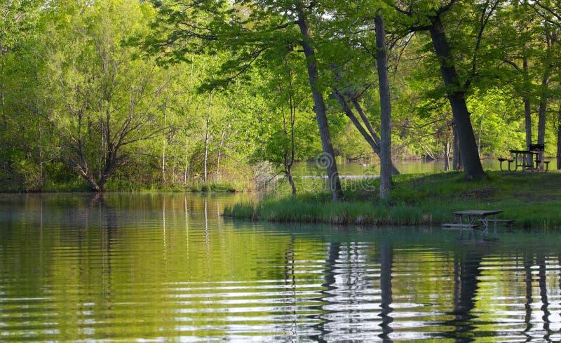 Сочные зеленые отражения парка и дерева стоковые фотографии rf