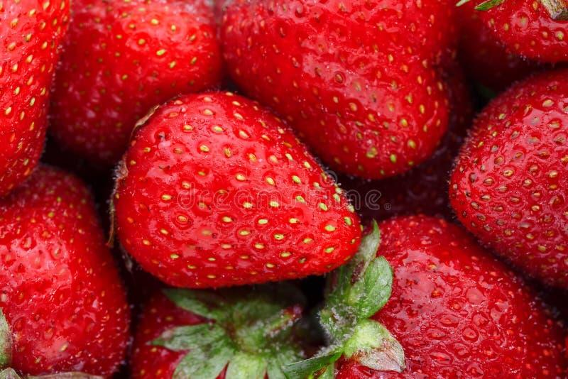 Сочные, зрелые естественные красные клубники без GMO Клубника - полная рамка : стоковая фотография rf