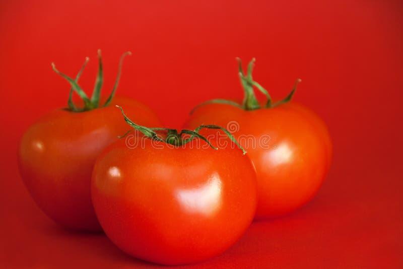 сочные красные томаты стоковое изображение rf