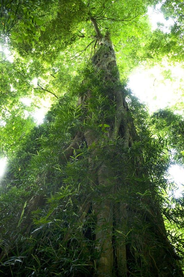 сочный дождевый лес стоковая фотография rf
