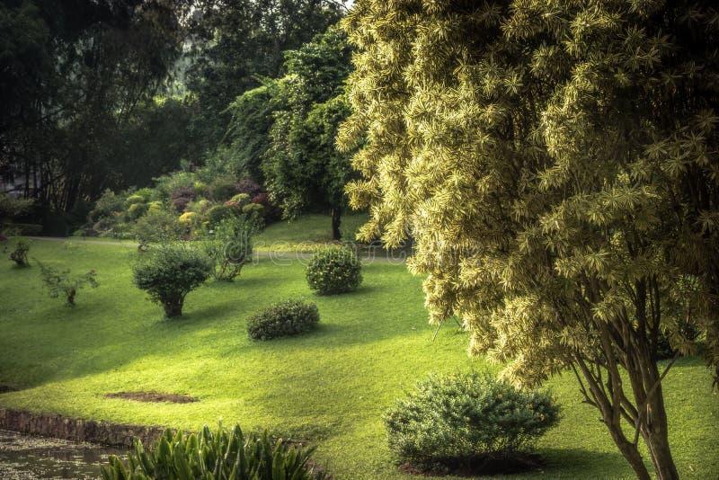 Сочный зеленый пейзаж сада с садом Peradeniya парка дизайна ландшафта публично королевским в окрестностях Шри-Ланка близрасположе стоковые фото