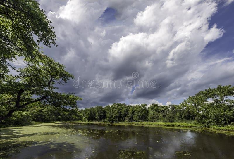 Сочный зеленый пруд на чесапикском заливе стоковое фото