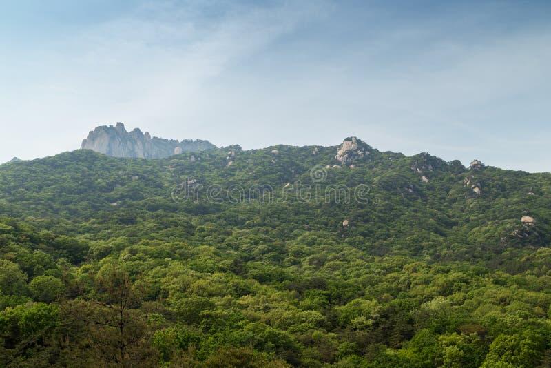 Сочный холм на национальном парке Bukhansan в Сеуле стоковое изображение rf