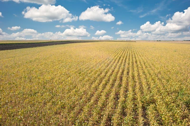 соя хлебоуборки полей стоковое фото rf