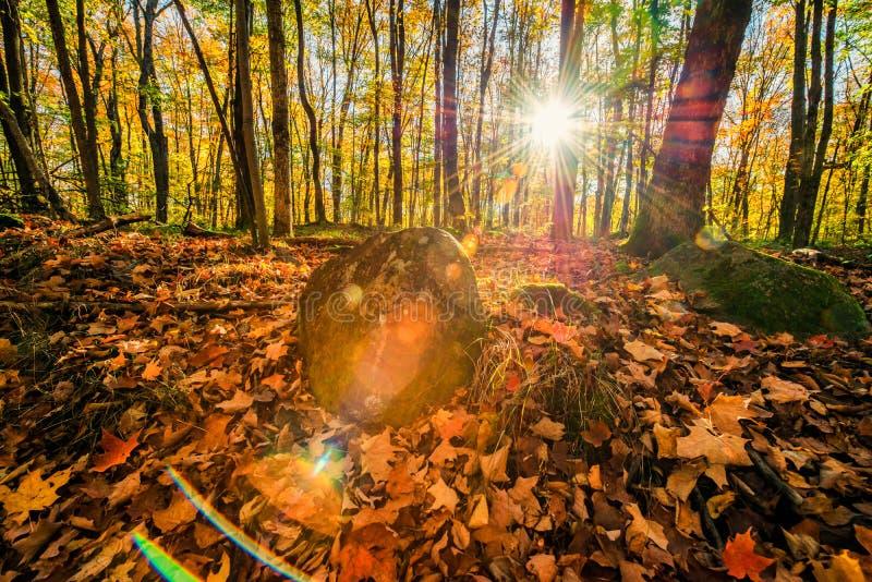 Солнечная вспышка леса осени стоковая фотография