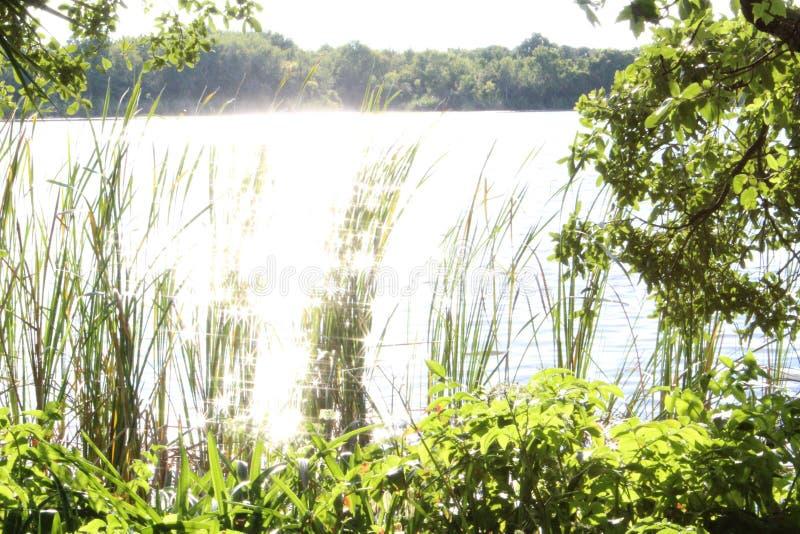 Солнечний свет на воде стоковое изображение rf