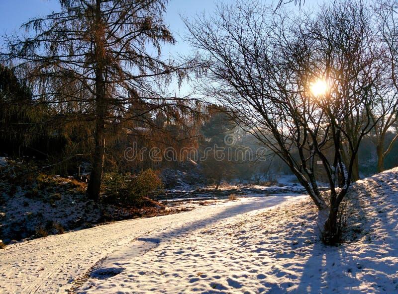 Солнечное Snowday стоковое фото rf