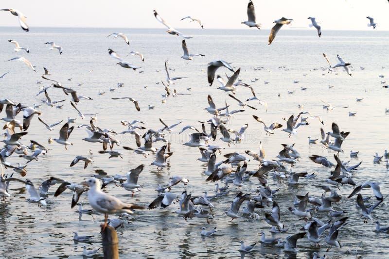 Солнечность налёт чайки группы стоковая фотография rf