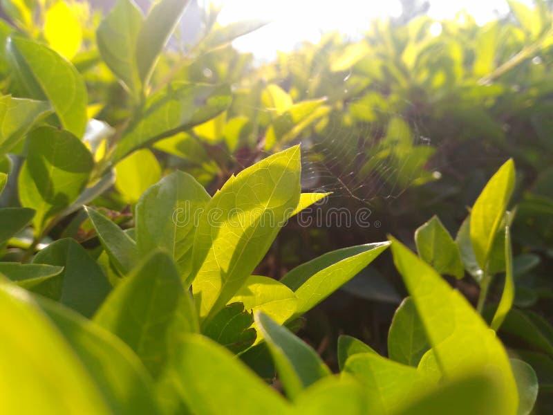 Солнечность утра стоковые изображения