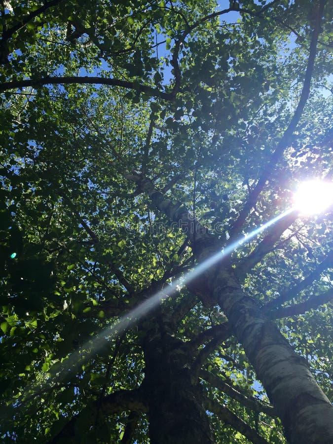Солнечность через деревья стоковое фото