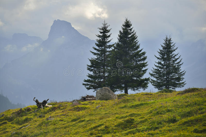 Солнечные Альпы и деревья стоковое фото rf