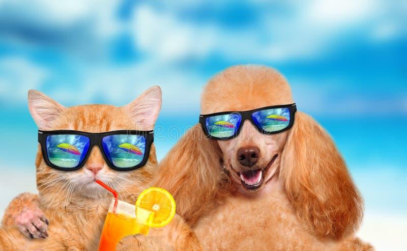 Солнечные очки кота и собаки нося стоковая фотография rf