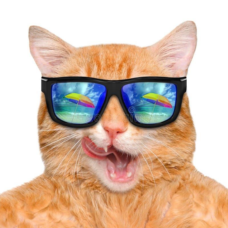 Солнечные очки кота нося ослабляя в предпосылке моря стоковое изображение