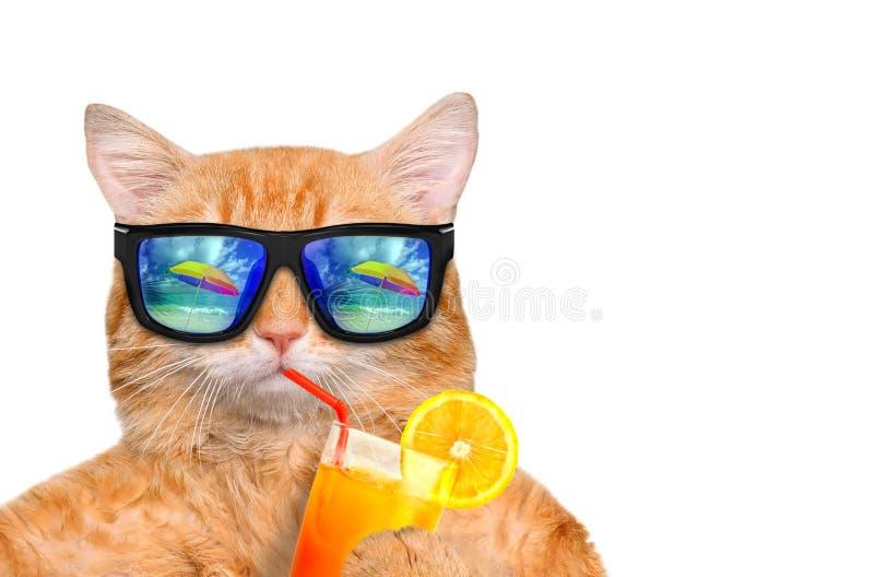 Солнечные очки кота нося ослабляя в предпосылке моря стоковые изображения rf