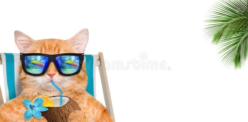 Солнечные очки кота нося ослабляя сидеть на deckchair и пить коктеиль стоковые изображения