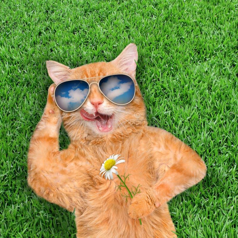 Солнечные очки кота нося стоковые изображения