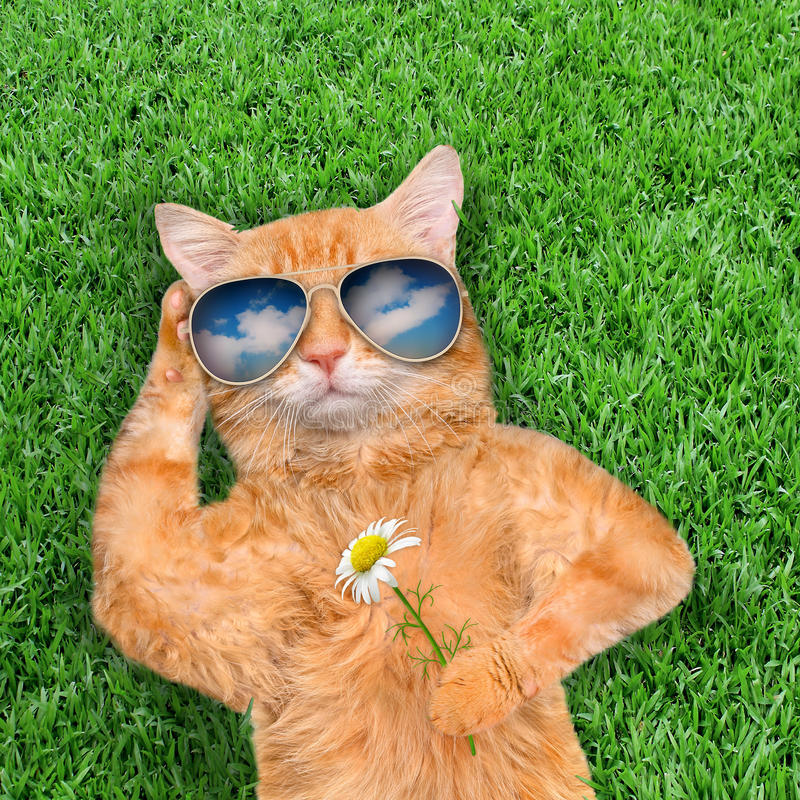 Солнечные очки кота нося стоковое изображение
