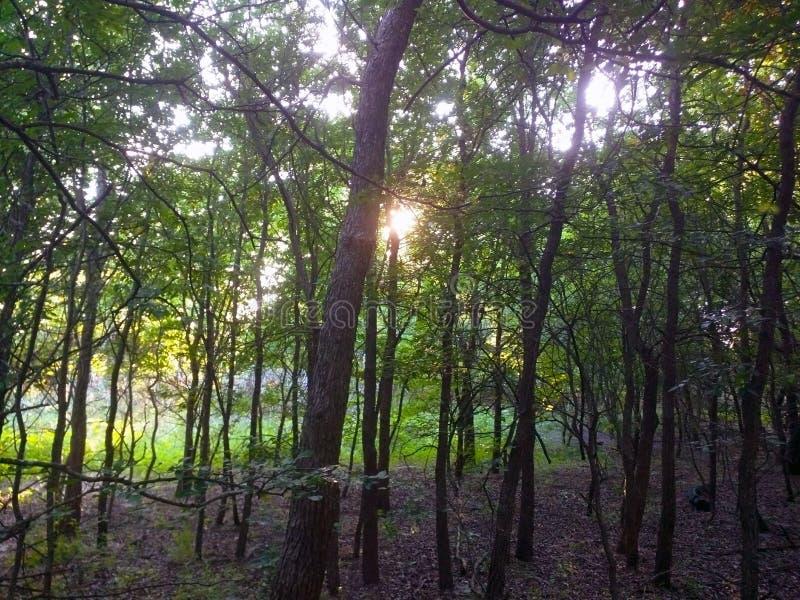 солнечные древесины стоковая фотография rf