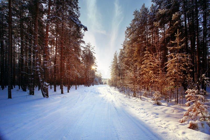 Солнечные лучи захода солнца леса зимы стоковые изображения rf