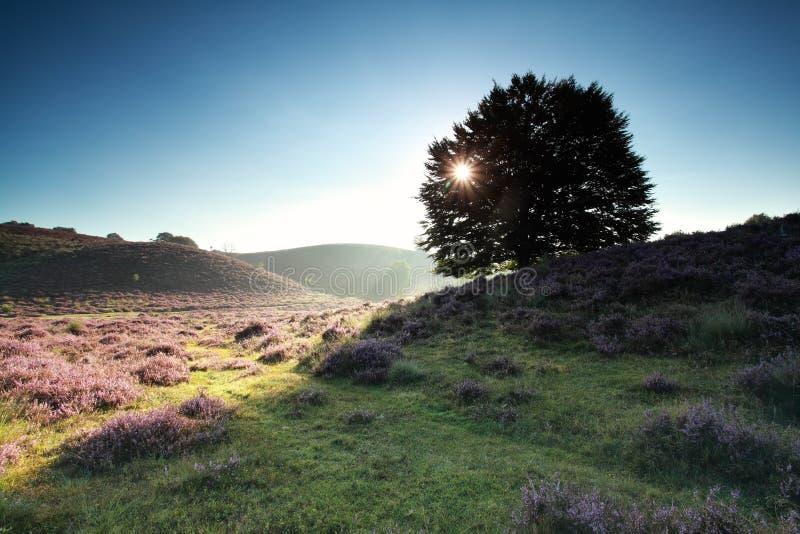 Солнечные лучи через дерево бука на холме стоковое фото