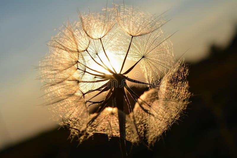 Солнечные fluffies стоковое изображение