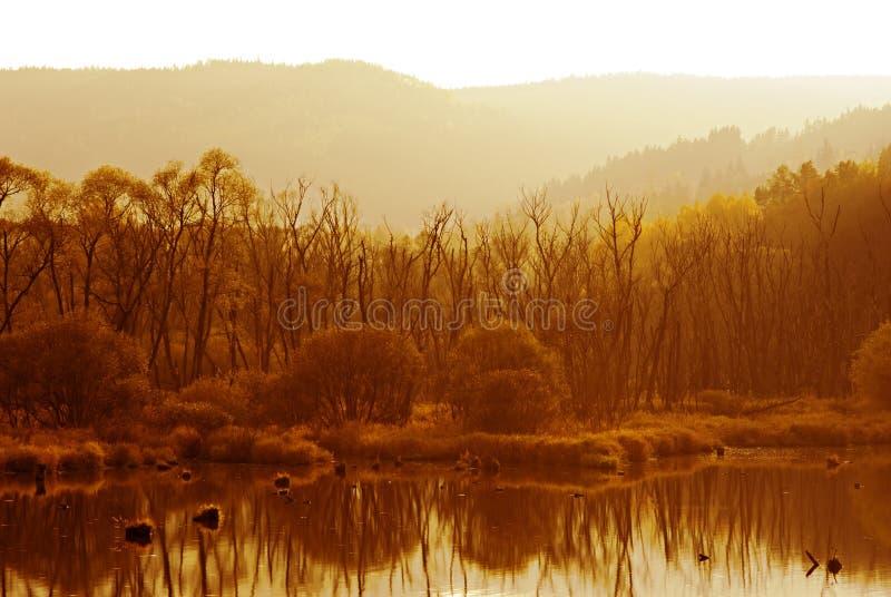 Солнечный ландшафт осени стоковое фото rf