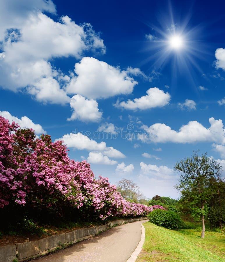 Дорога к саду весны стоковое фото rf