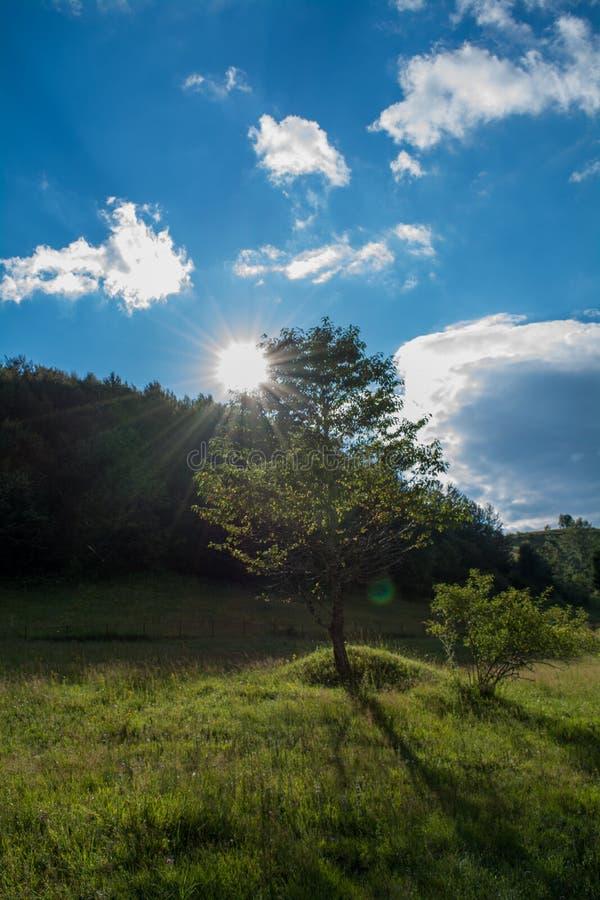 солнечный вал стоковое фото