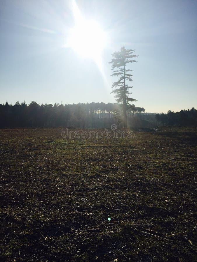 Солнечный взгляд леса стоковая фотография