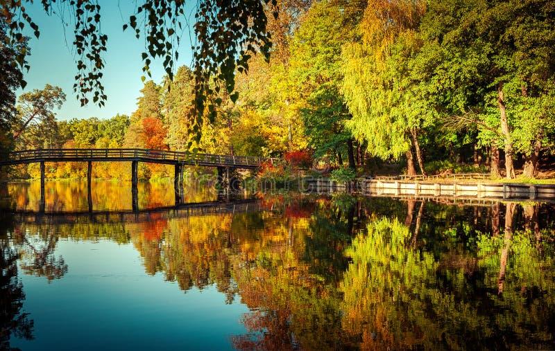 Солнечный день в внешнем парке с красочными деревьями осени стоковые изображения rf