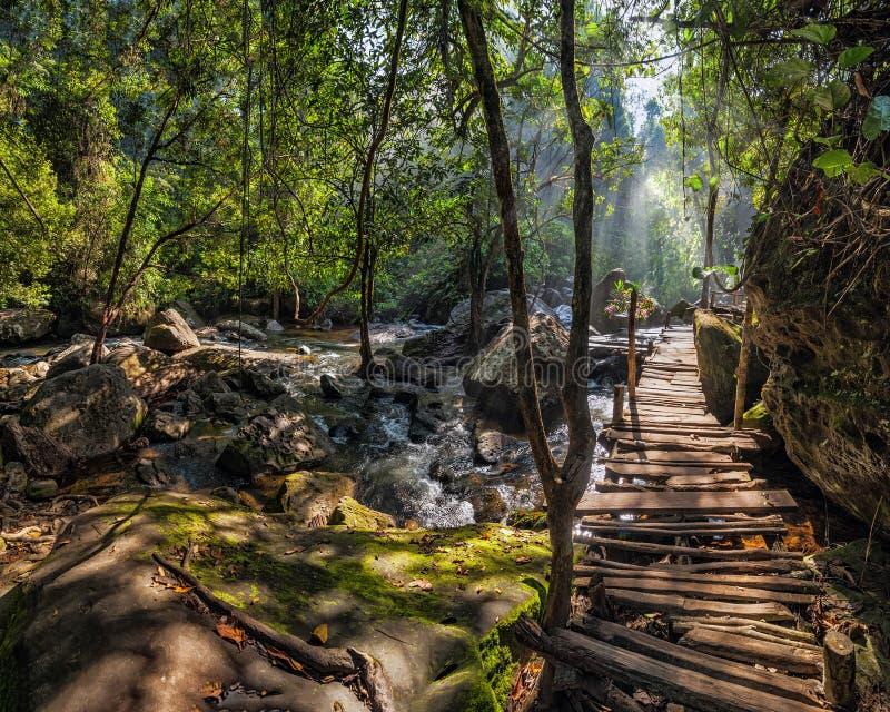 Солнечный день на ландшафте тропического леса с деревянным мостом a стоковая фотография rf
