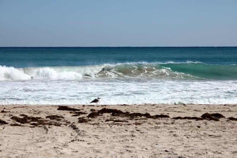 Солнечный день на пляже Флориды с уединённой чайкой стоковая фотография