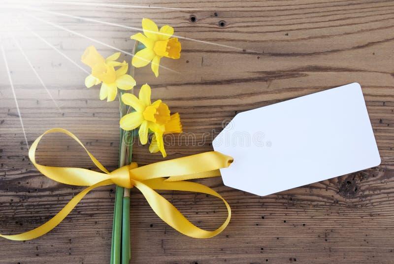 Солнечный желтый Narcissus весны, ярлык, космос экземпляра стоковое изображение rf