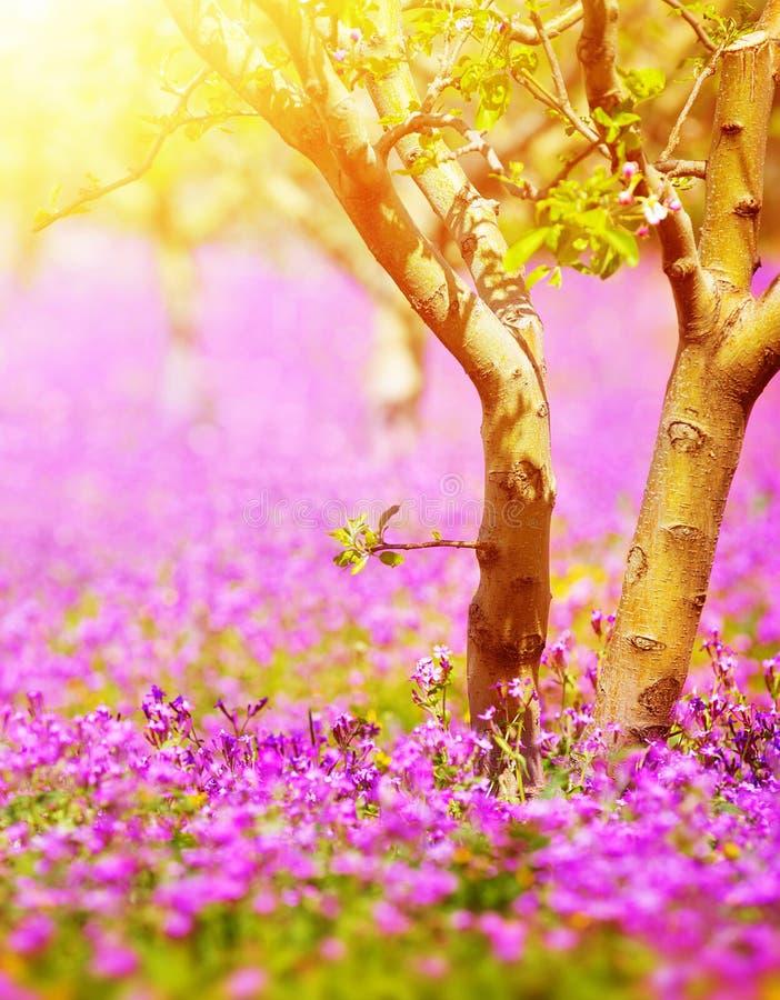 Солнечный сад фруктового дерев дерева стоковое изображение rf