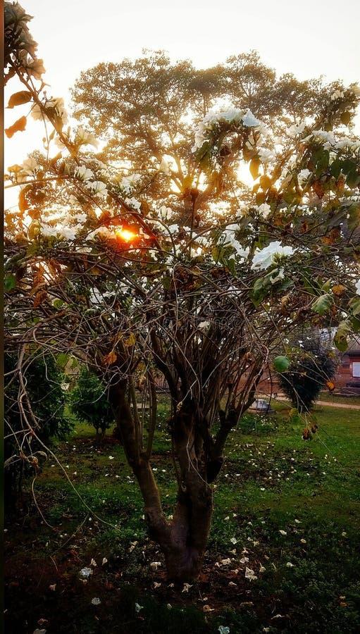 Солнечный свет и природа стоковые изображения