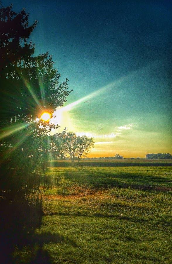 Солнечный свет светя через деревья стоковые фотографии rf