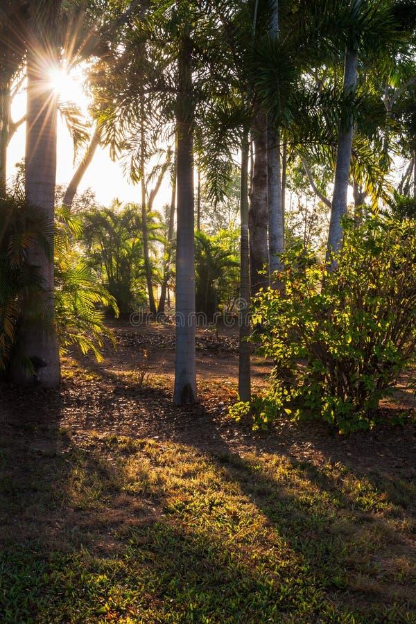 Солнечный свет утра между деревьями стоковые изображения