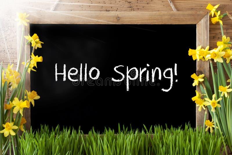 Солнечный Narcissus, доска, весна текста здравствуйте! стоковое фото