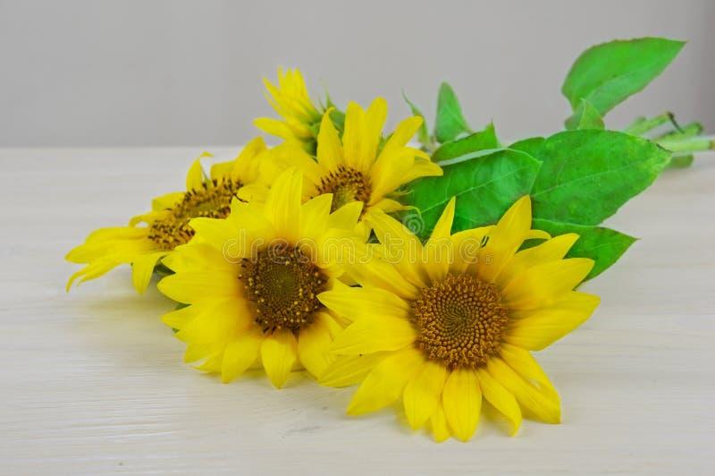 Солнцецветы на белой деревянной предпосылке стоковые изображения rf