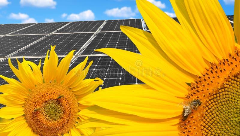 Солнцецветы с панелями солнечной энергии стоковое фото rf