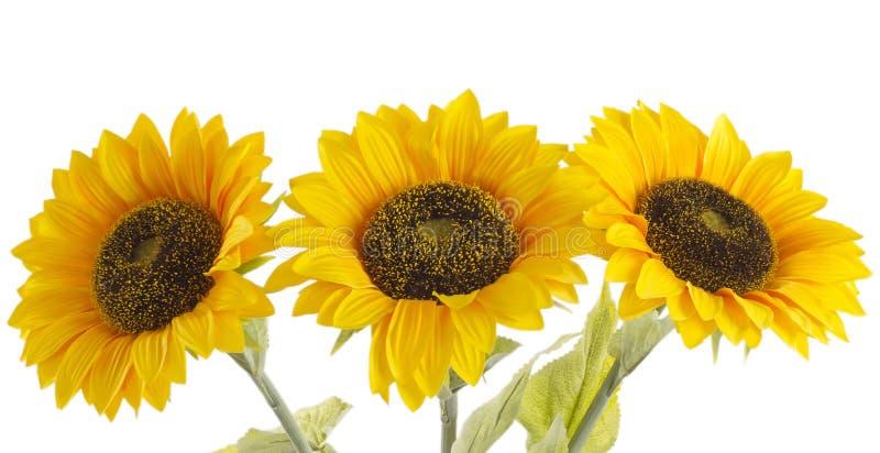 Download Солнцецветы стоковое фото. изображение насчитывающей яркое - 41661512