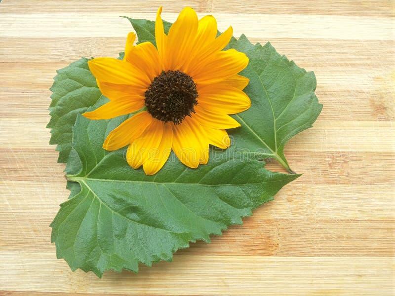 Солнцецвет и свои листья наваливают на деревянной предпосылке стоковая фотография
