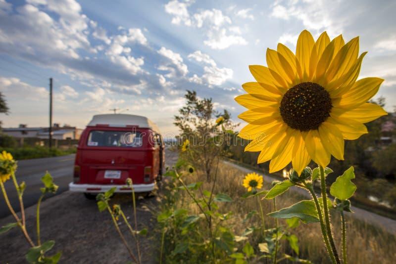 Солнцецвет и шина Vw стоковое фото rf