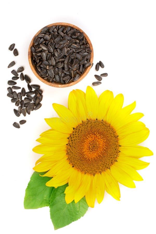 Солнцецвет при семена и листья изолированные на белой предпосылке стоковые изображения rf