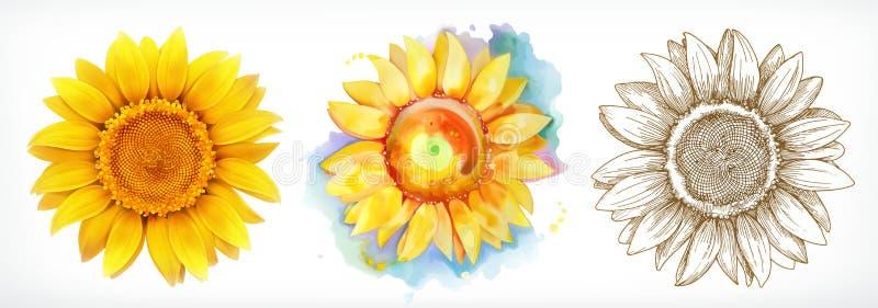 Солнцецвет, различные стили, чертеж вектора, комплект значка иллюстрация вектора